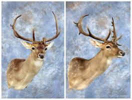 Phenegar Fallow Buck by WeirdCityTaxidermy