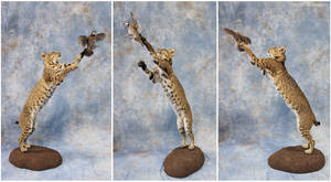 In-Flight Meal (Cat and Quail) by WeirdCityTaxidermy