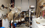 Shop Snapshot 050416 by WeirdCityTaxidermy
