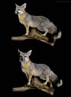 Bingham Gray Fox by WeirdCityTaxidermy