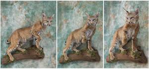Bobcat Blues by WeirdCityTaxidermy