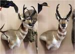 Speed Goat by WeirdCityTaxidermy