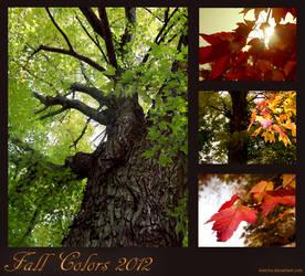 Fall Colors by kiwicha