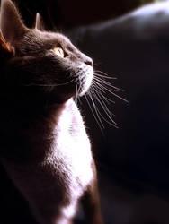 My Cat by kiwicha
