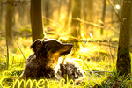 Emmerich by farothxx