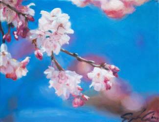 Cherry Blossoms by SophiaChen0