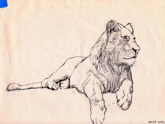 study of white lion by Dr-Cruz
