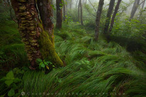 Foggy Craggy (I) by ChadRouthier