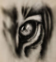 Eye of the Hunter by XxJinkinxX