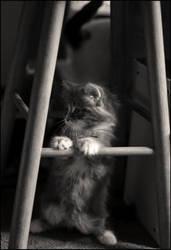 Kitten by Purplejackdaw