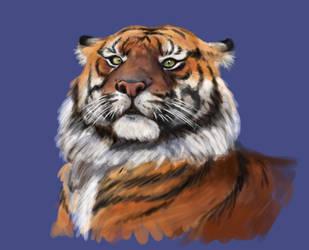 Tiger by Yuraura
