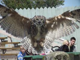 Great Horned Owl by RakuenVI