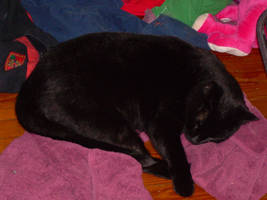 Hikage Sleeping by King-Arturia-Emiya