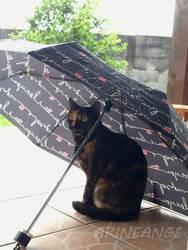 Rainy Day by Arineange