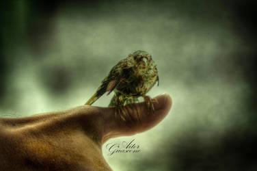 Wet Birdie by TheBlueKid
