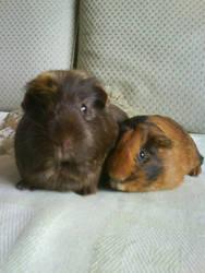 Two little darlings by Busbi