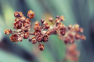 Dry Blossoms by Igotdonuts