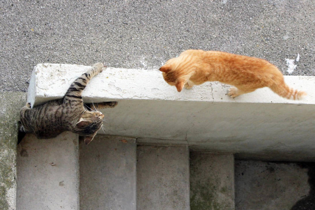 Catfight In The Backyard 5 By General Custer On Deviantart