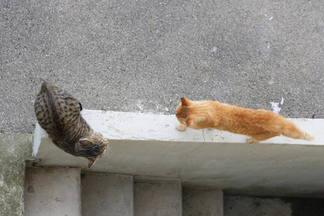 Catfight In The Backyard 4 By General Custer On Deviantart