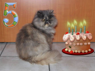 Today it's Sina's birthday : she's 5 years old ! by General-Custer
