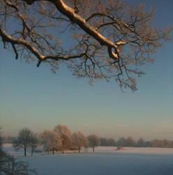 Snowy Afternoon Sun by Cluisanna