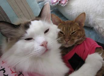 Cat Snuggles by ongaku88