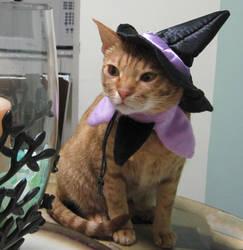 Witch Cat by ongaku88