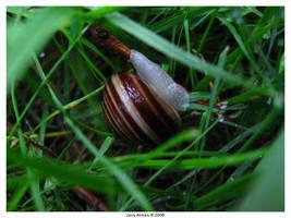 Snail by dInmIn