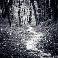 A Path by sekcyjny