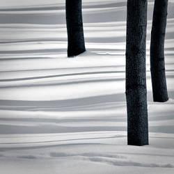 Las Bielanski II by sekcyjny