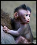 Punk Monkey by Haufschild