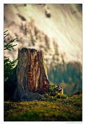 Stump by miki3d