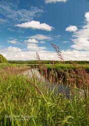 Cornwallis River by AEisnor