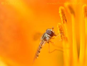 Orange lunch by Soffeline