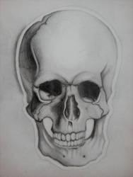 Skull WIP by Hope-Sentinels-Alive