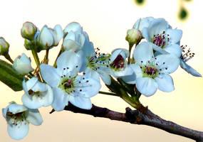 spring by eocjtlels