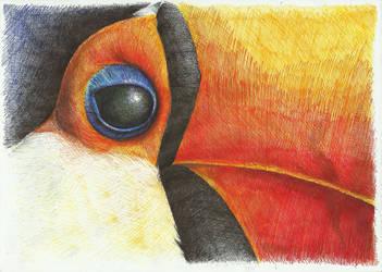 tucan by Lotkass