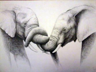 D slonie by Lotkass