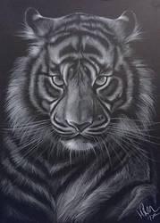 Tiger by Lotkass