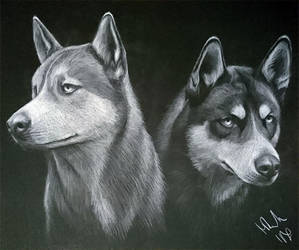Husky by Lotkass
