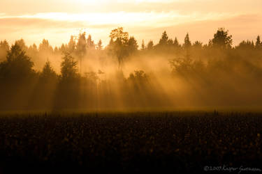 Mist and Sunlight II by KasperGustavsson