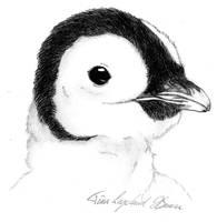 Pingu the Baby Emperor Penguin by superzebra