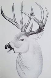 Deer in pen by lolpants725