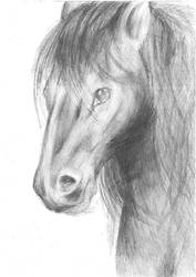 Horse head by Psyprass