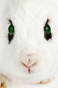 Digital Rabbit by DLIMedia