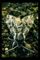 the moth by 111blur111 by theblackpixel