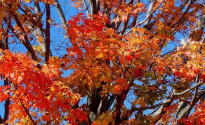 Fiery Branches by GraceJediHeart