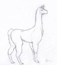 Zale sketch by RaShan