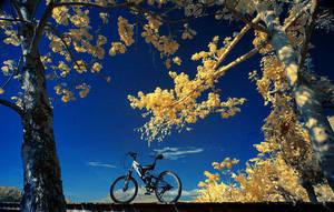 a bike by ferrysetiawan