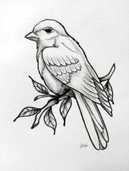 Little Bird by Loodlez